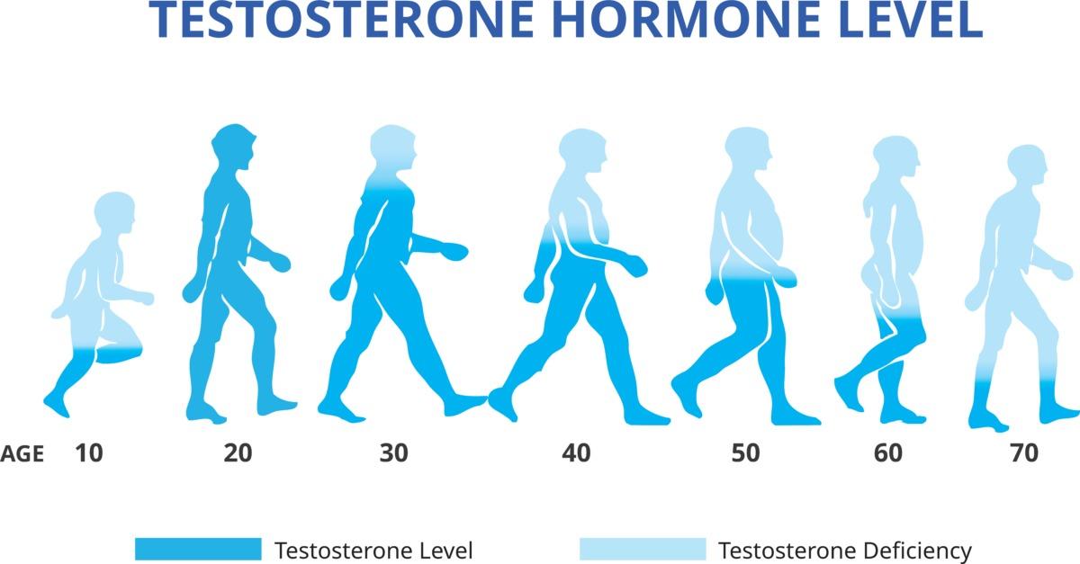 男性ホルモンの推移